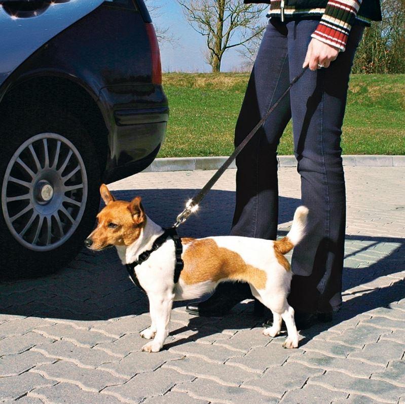Auto-Hundegeschirr mit Leine