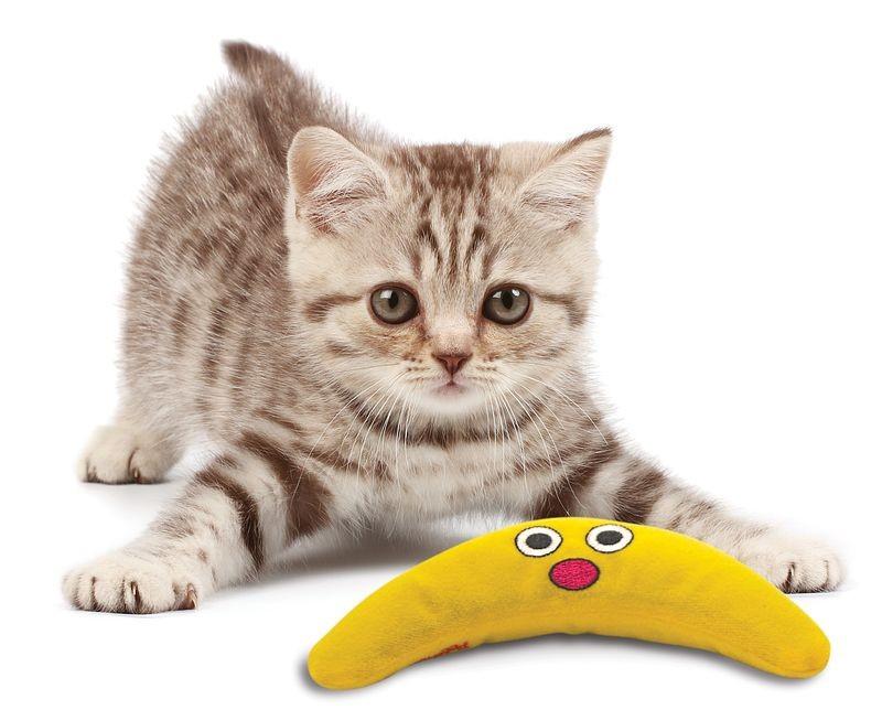 Petstages Catnip Boomerang Buddy