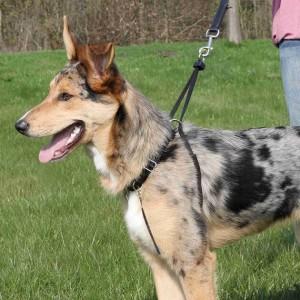 Lead'n'Walk Correctietuig voor de hond