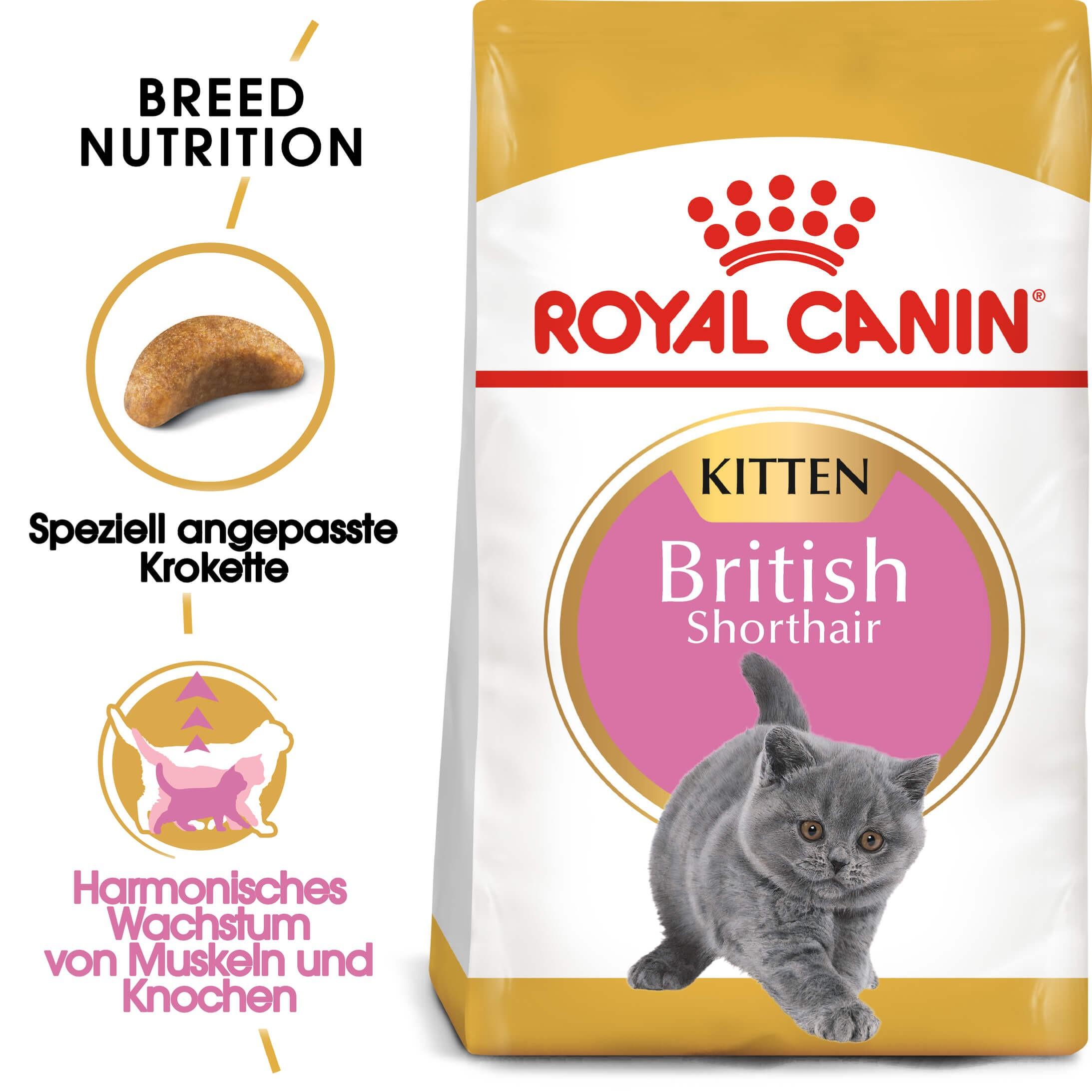 Royal Canin Britisch Kurzhaar Kitten Katzenfutter