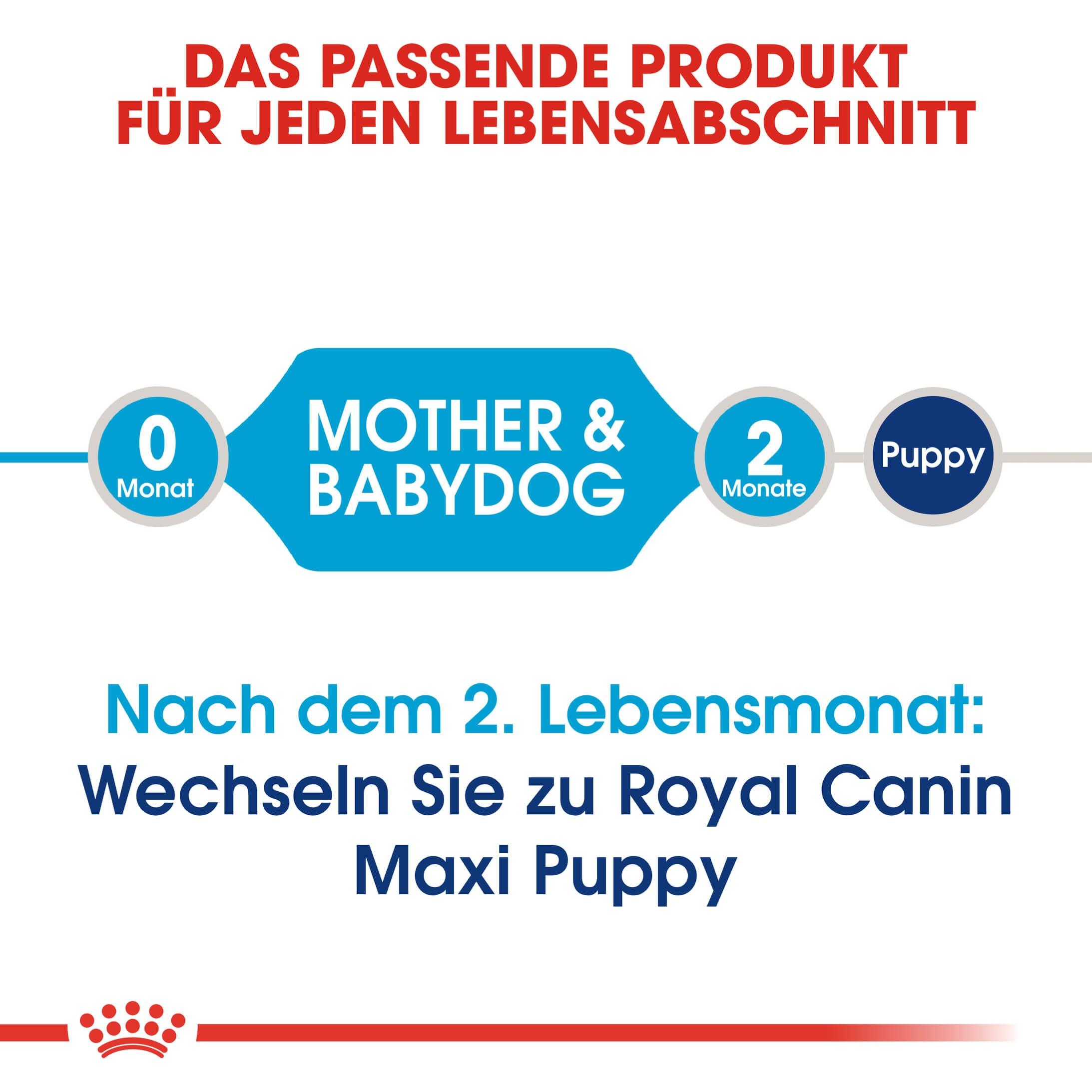 Royal Canin Maxi Starter Hundefutter