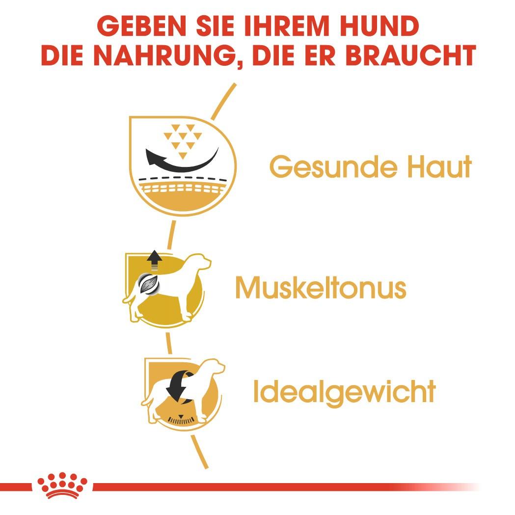 Royal Canin Adult Mops Hundefutter