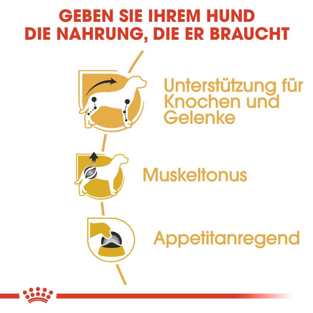 Royal Canin Teckel/Dachshund Adult Wet