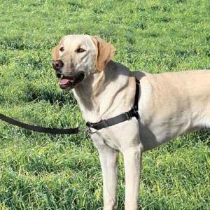 Easy Walk Tuig voor de hond
