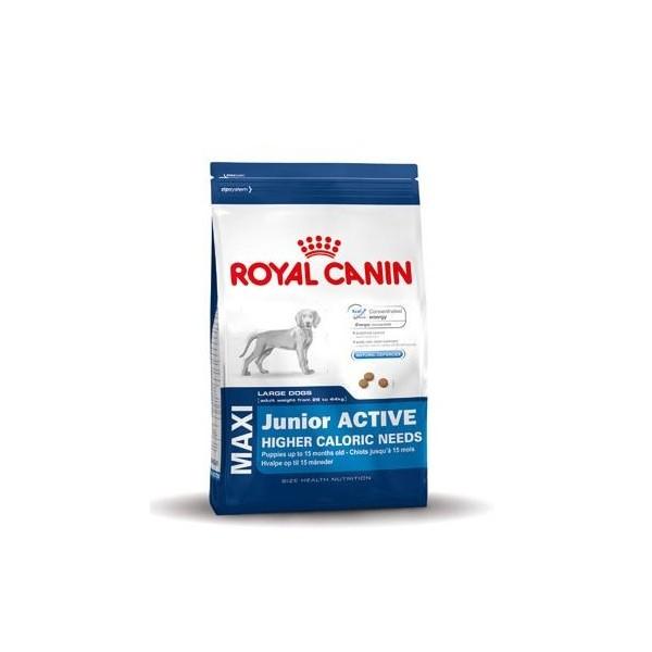 royal canin maxi junior active hundefutter online. Black Bedroom Furniture Sets. Home Design Ideas