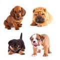 Rassen Hundefutter