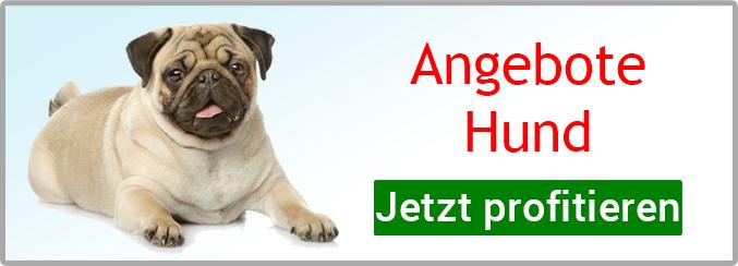 Angebote Hund