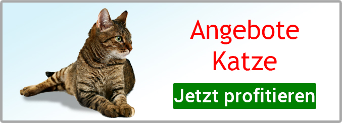 Angebote Katze